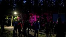 värivalot valaisemassa puita