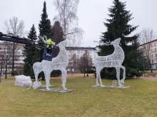 Jouluvalomaan porot rakentuvat kirkkopuistoon