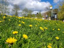 Keväinen kuva pysäkistä Puistokadulla