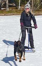 Koiran juoksee potkurin edessä jäällä.