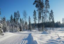 Talvinen maisema hiihtoladusta
